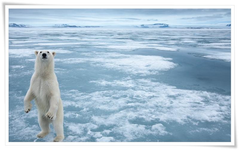 Tema Ártico - Imagem 1 do software