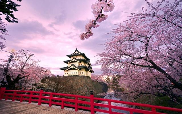 Tema Cerejeiras em Flor no Japão - Imagem 1 do software