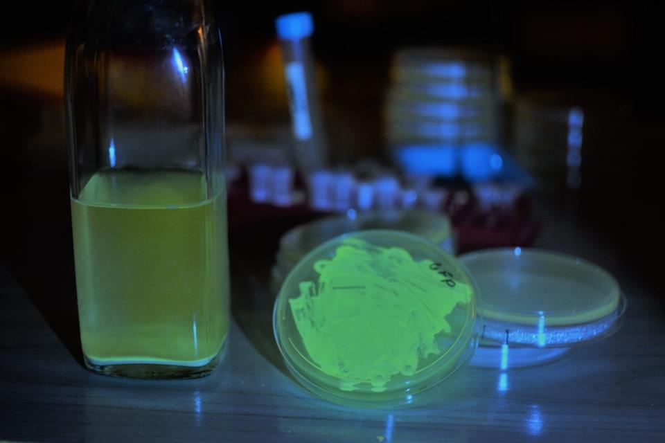 Este biohacker está vendendo um kit para você fazer cerveja fluorescente