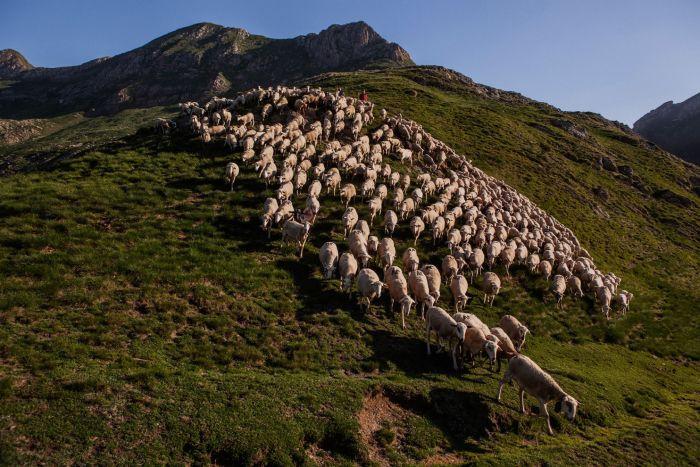 Terreno irregular dos Pirineus favorece acidentes com ovelhas (Crédito: Reprodução)