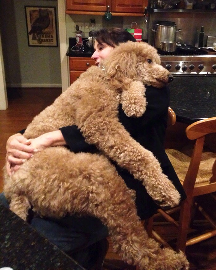Cachorro no colo da mamãe