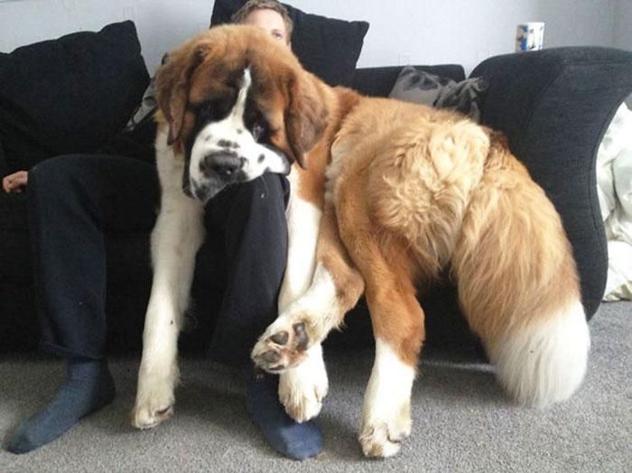 Pessoa debaixo de um cão