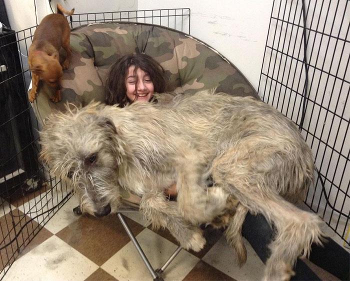 pessoa perto de um cachorro