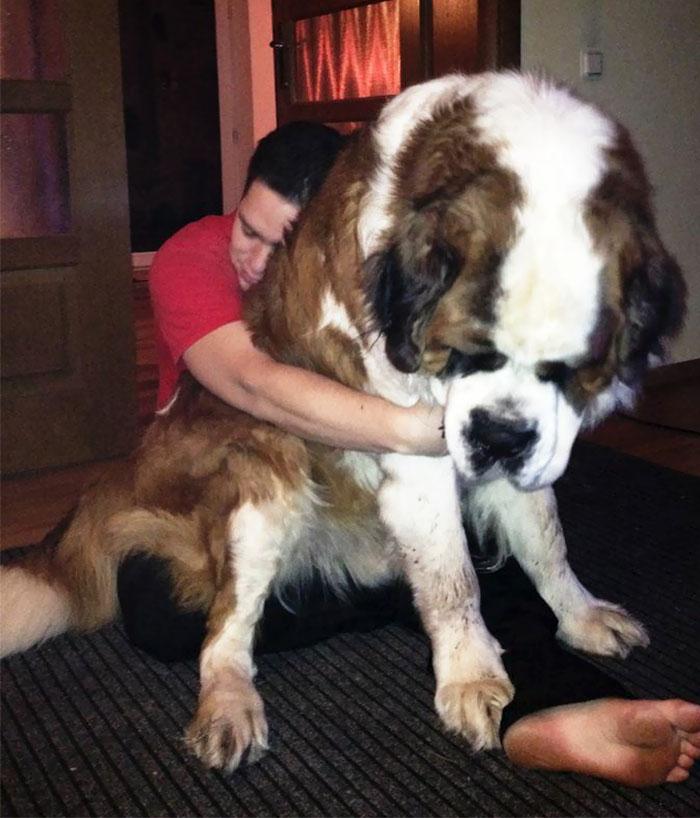 Um cão marrom e branco