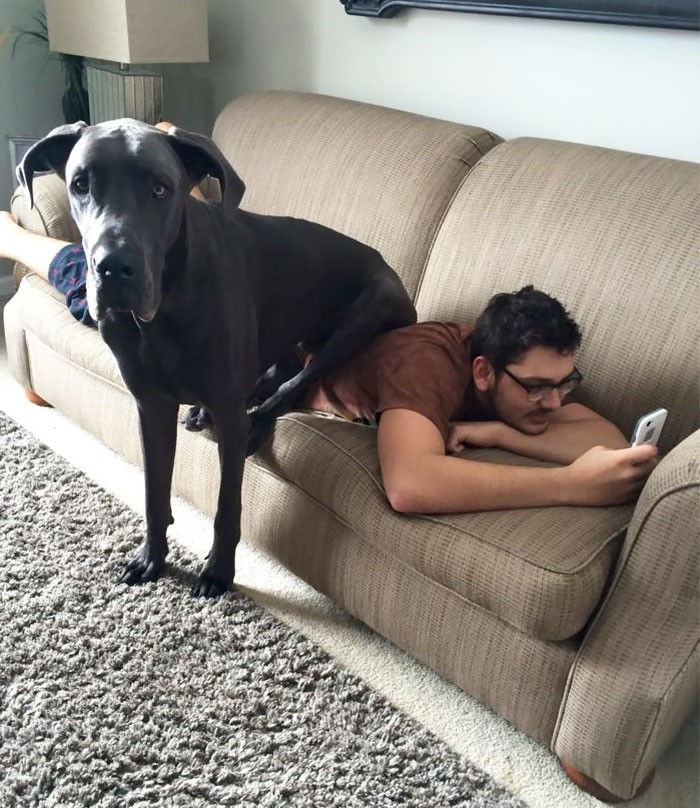 Um cão sentado num sofá