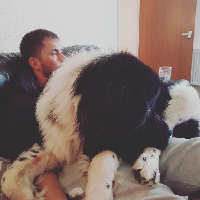 Um homem segurando um cão