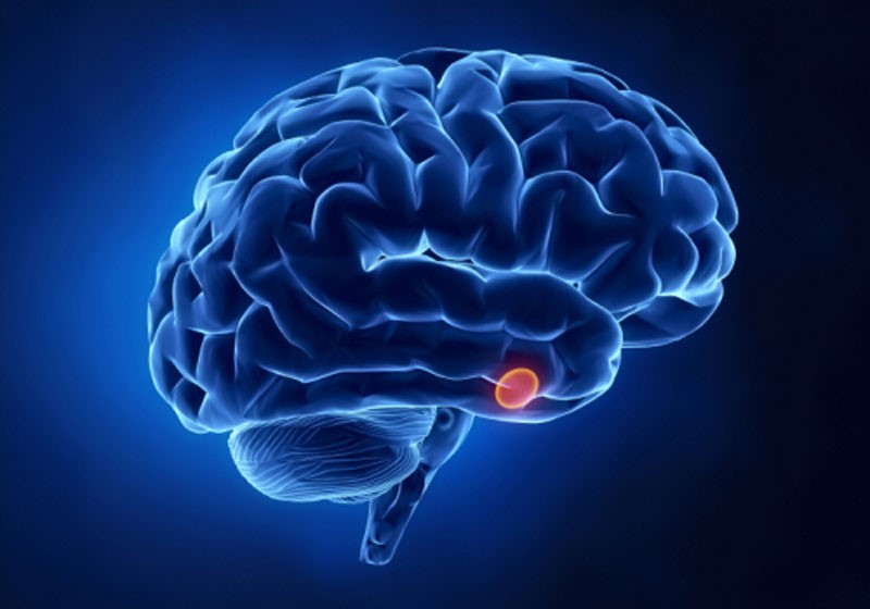 cérebro hipófise