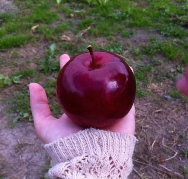 Uma mão segurando uma maçã