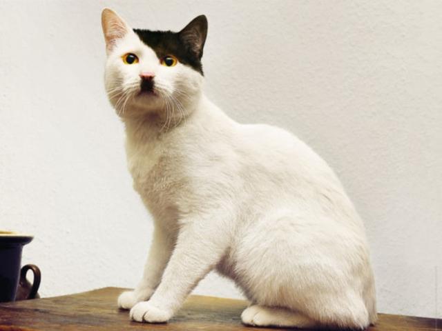 Um gato sentado numa mesa