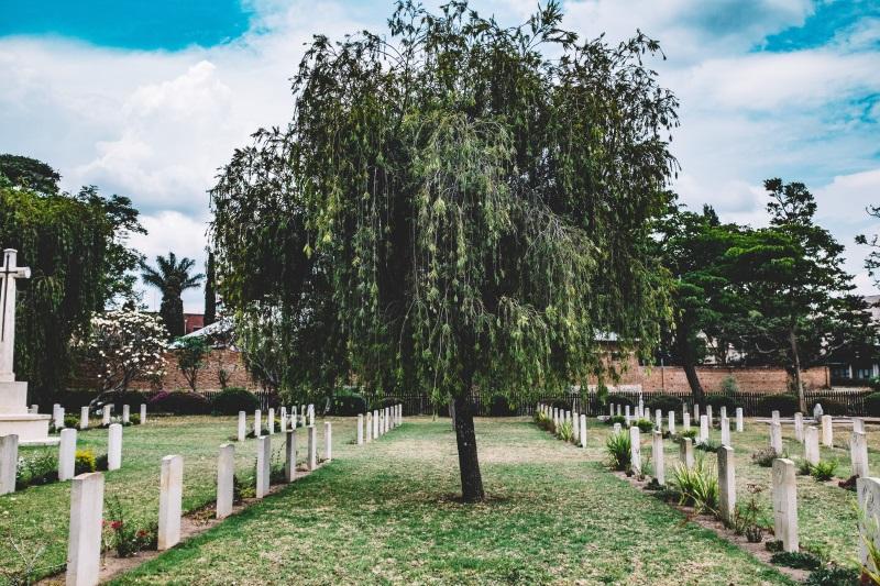 Uma árvore em um cemitério