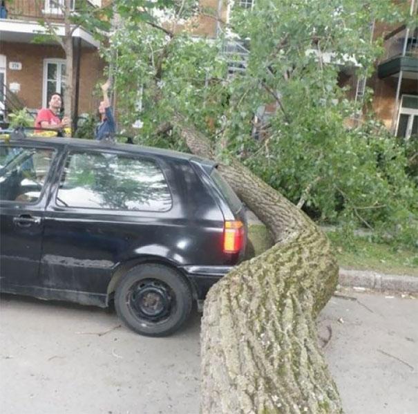 Carro estacionado sob árvore