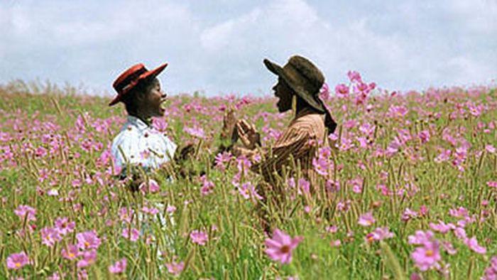 Uma flor rosa em um campo