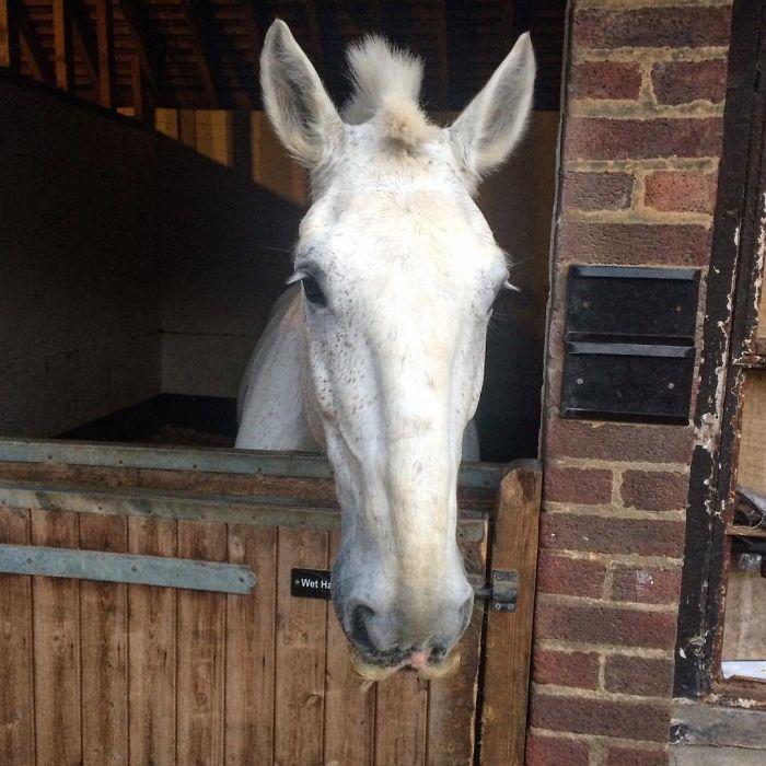 Um cavalo branco