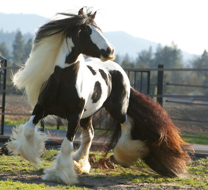 Um cavalo em um campo