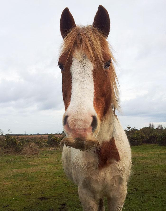 Um cavalo marrom e branco
