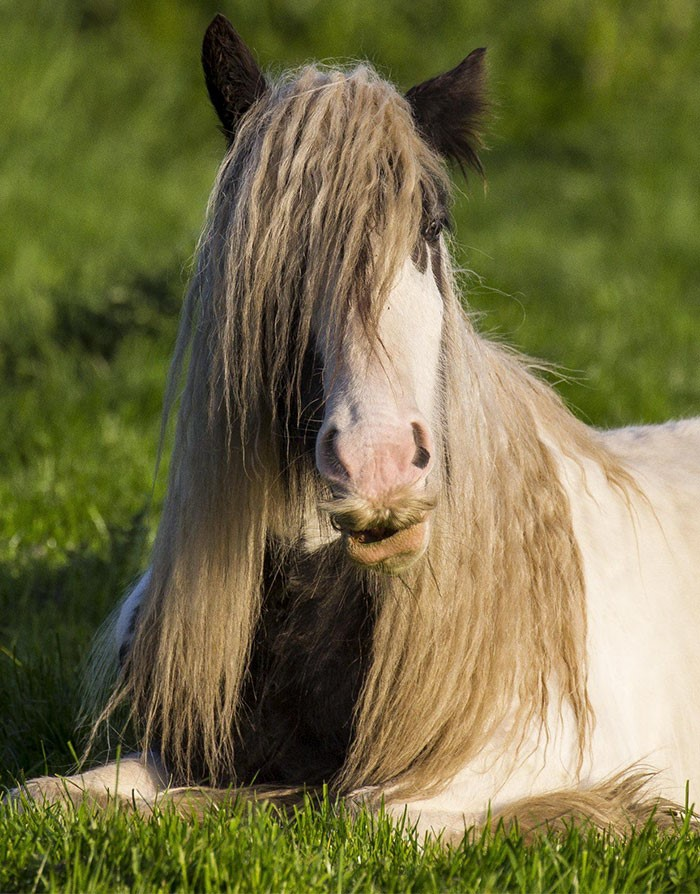 Um cavalo parado em um campo
