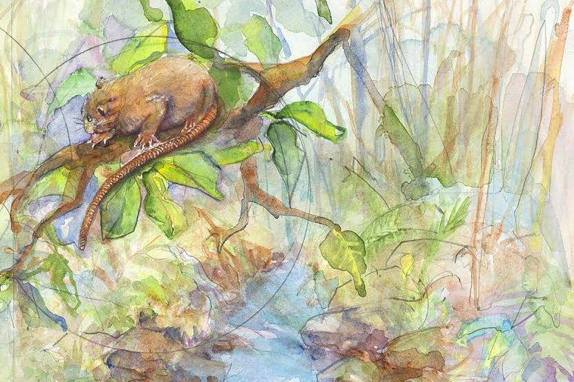 Aquarela retratando rato