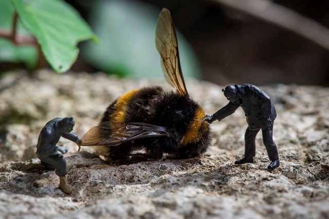 Ladrões de mel