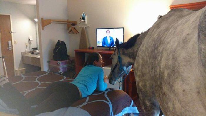 Cavalo no hotel