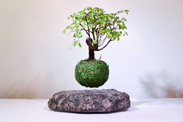 bonsai flutuante