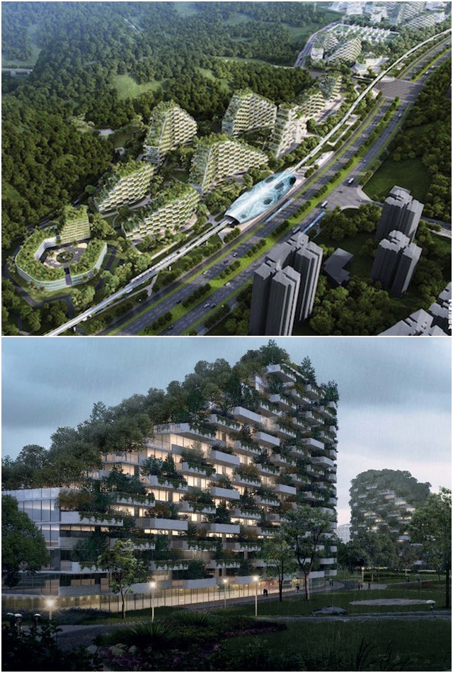 cidade das plantas