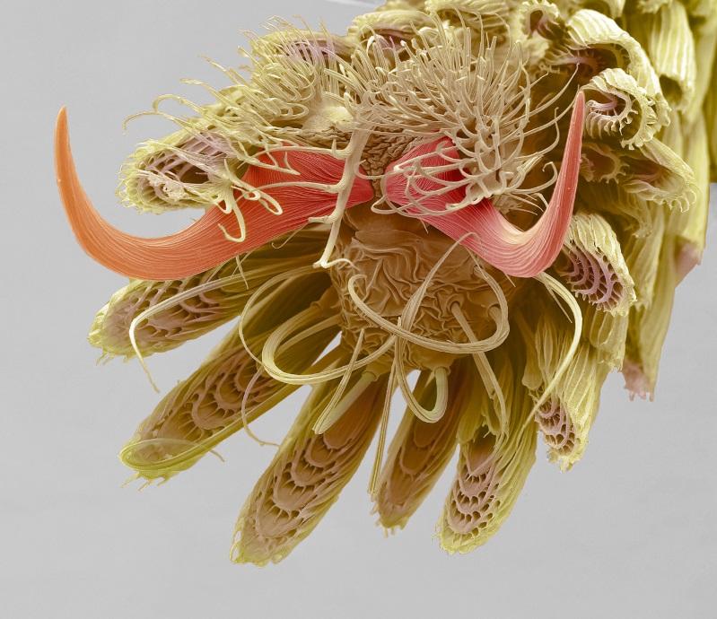 Imagem microscópica