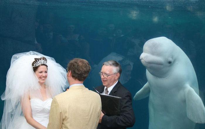 photobomb em casamento