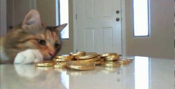 Gato roubando tesouro