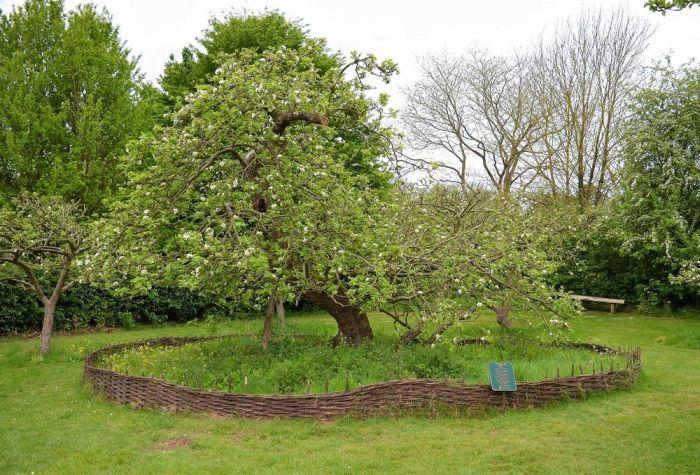 Árvore de Newton