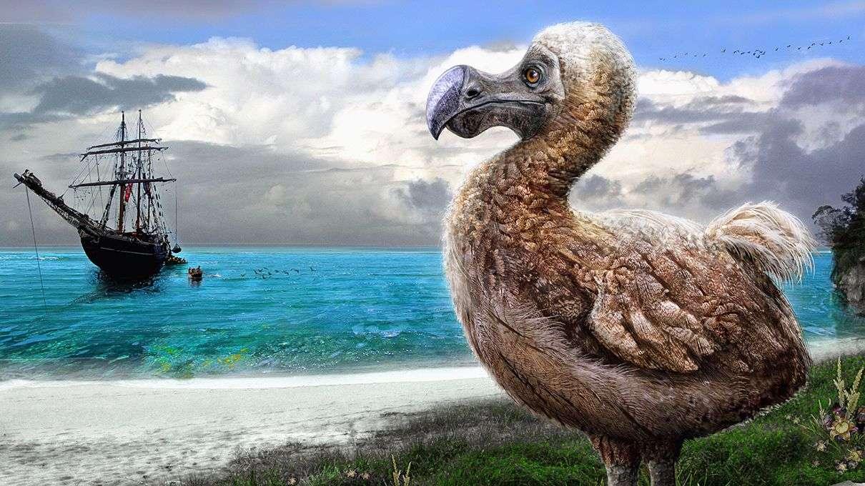 O Dodo foi um deles.
