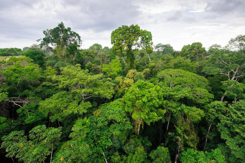 Trilhões de árvores