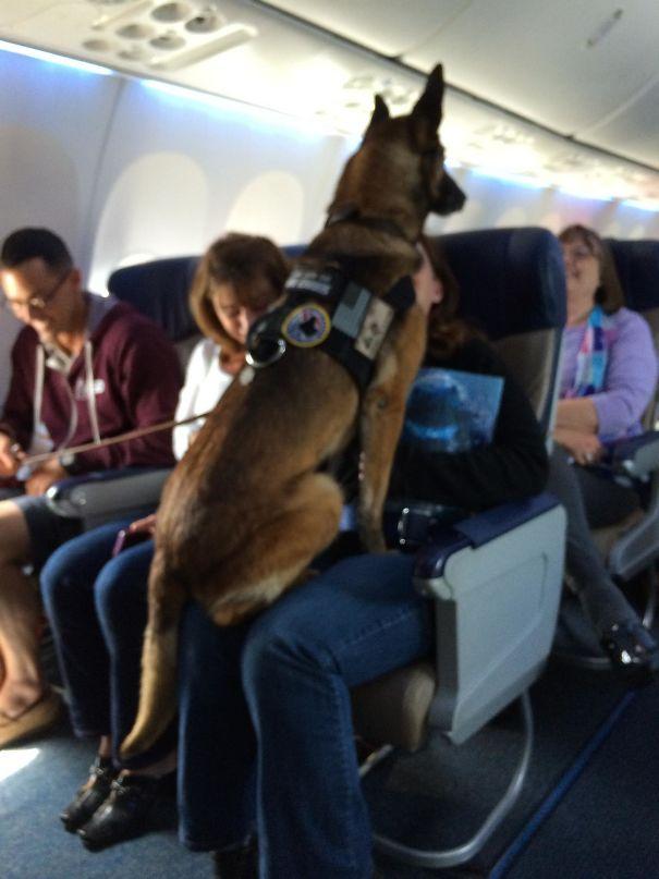 Cachorro no avião