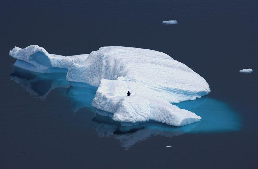 Pinguim fotografado em iceberg