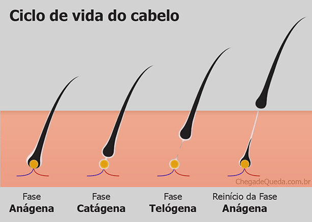 ciclo cabelo