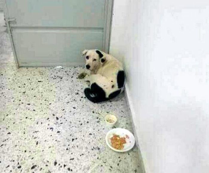Nube Viajera se isolou em um canto e recusava comida e água (Crédito: Reprodução)