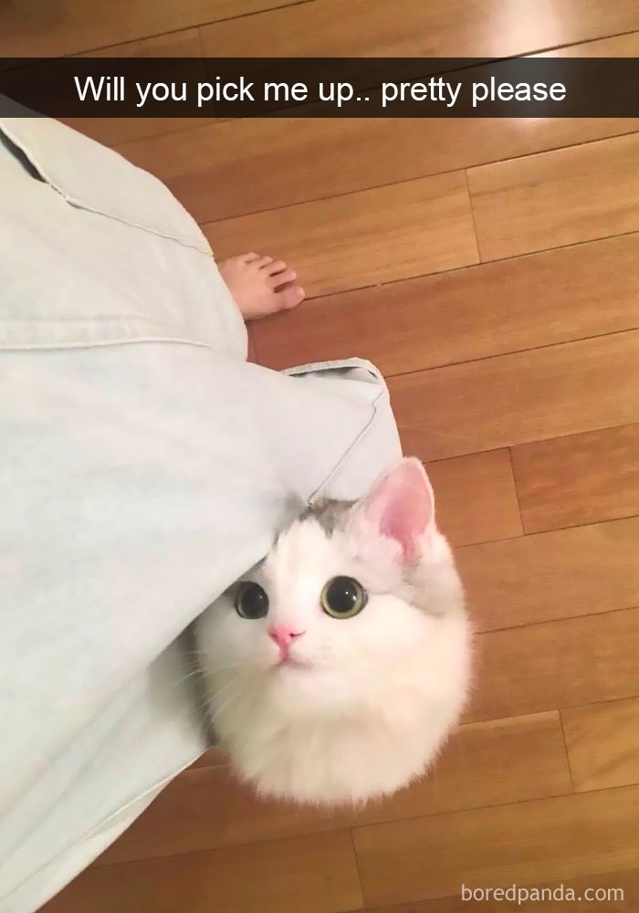 snaps de gatos