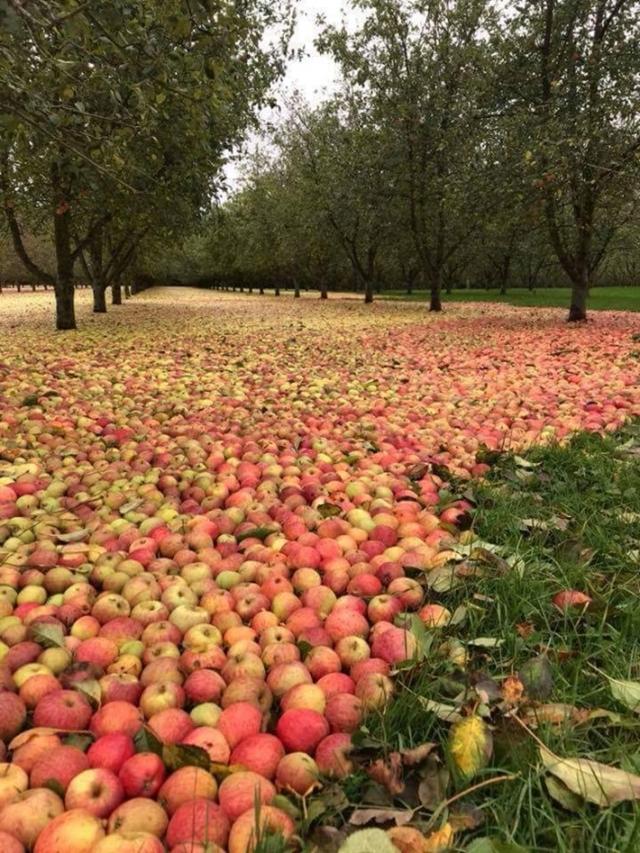 Mar de maçãs