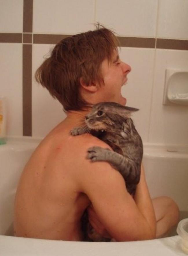 banho com gato