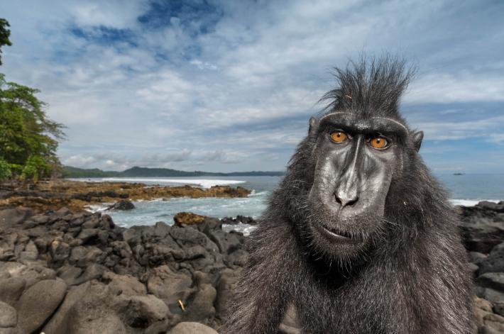 (Crédito: National Geographic/Stefano Unterhiner)