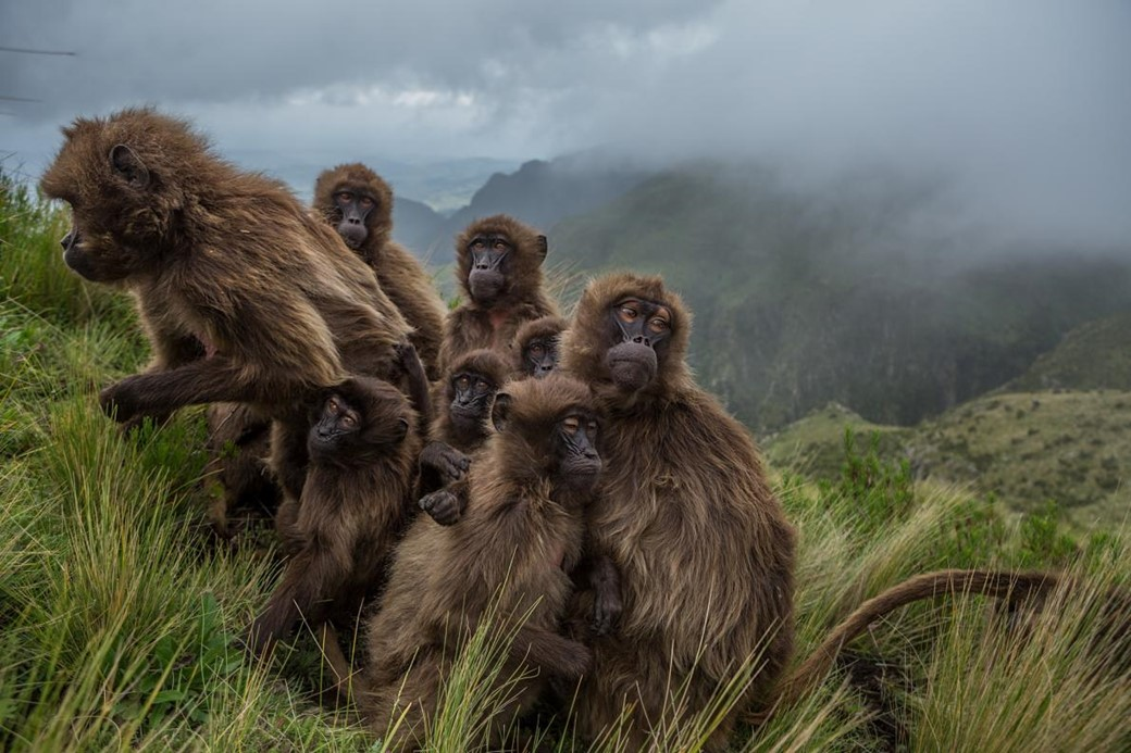 (Crédito: National Geographic/Jeffrey Kerby e Trevor Beck Frost)