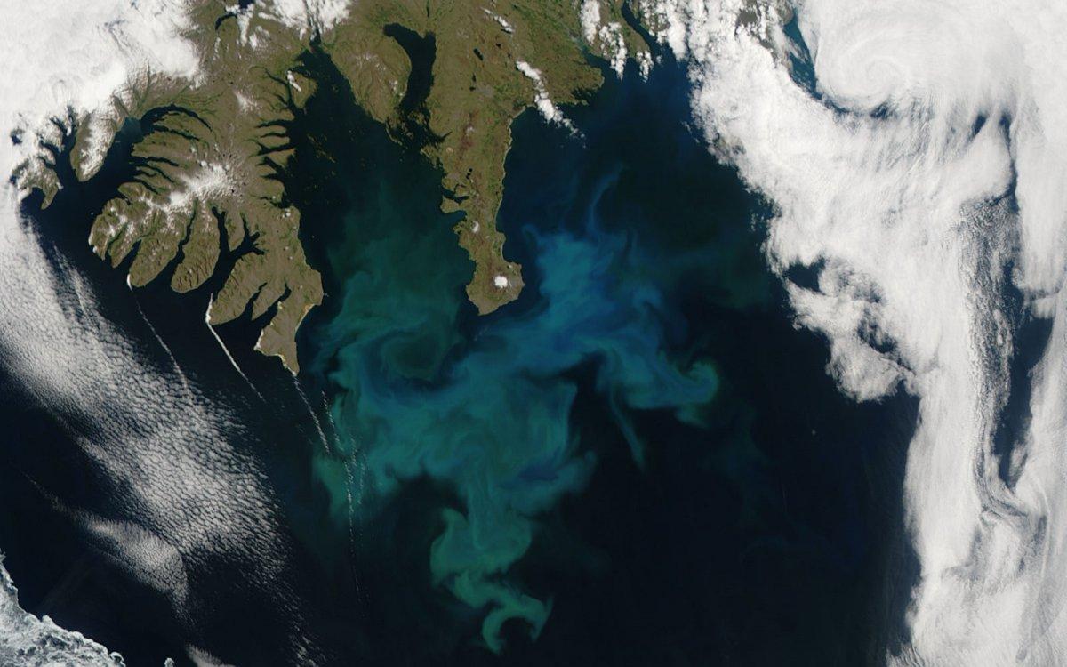 Fitoplâncton na Islândia