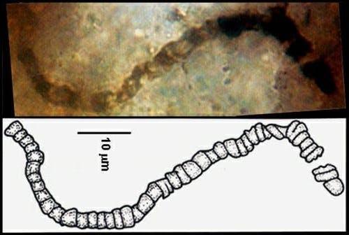 Fóssil microbiano