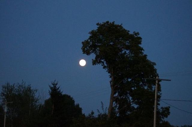 abocanhar a Lua