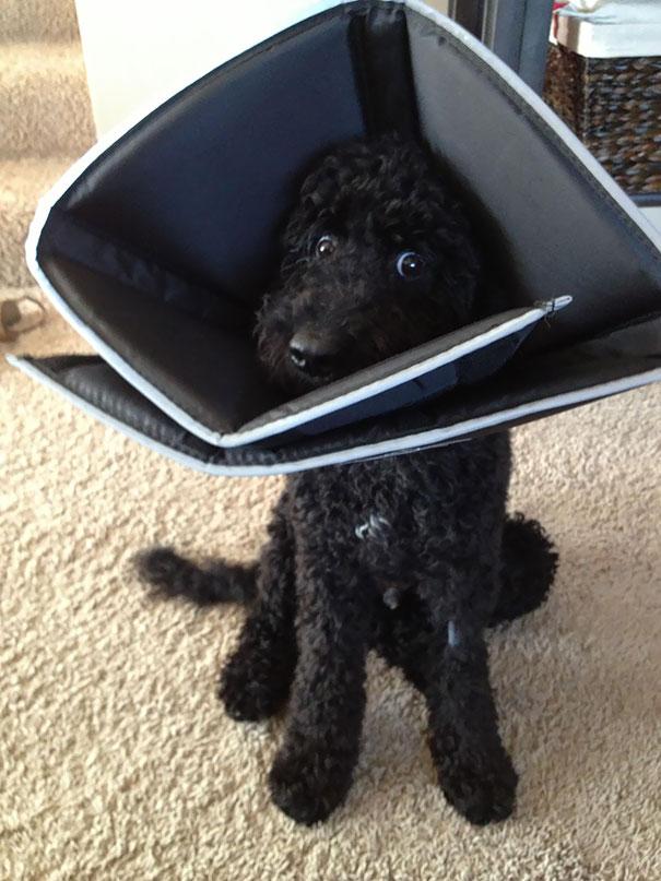 depois do veterinário