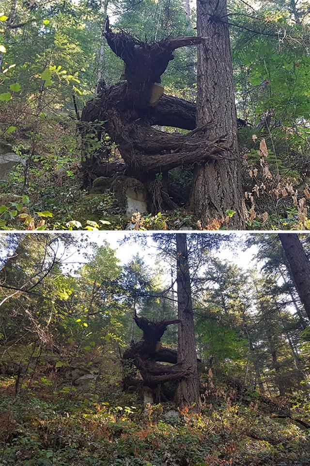 Groot, é você?