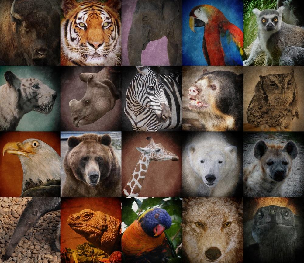 Animais ameaçados