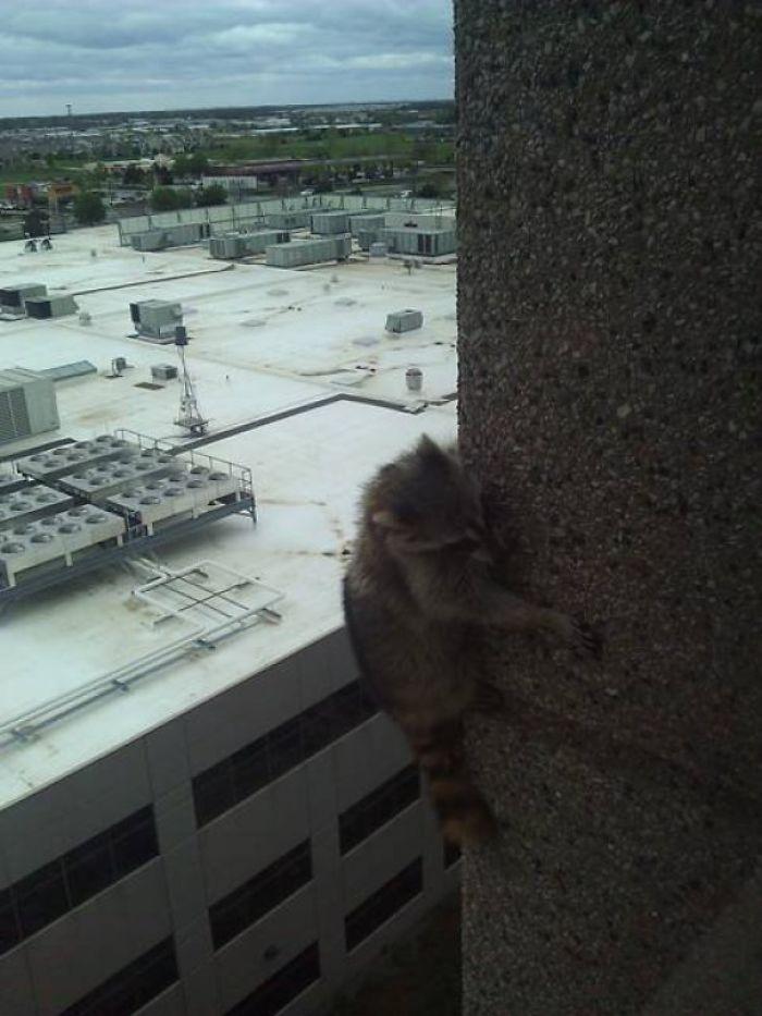 animais na janela