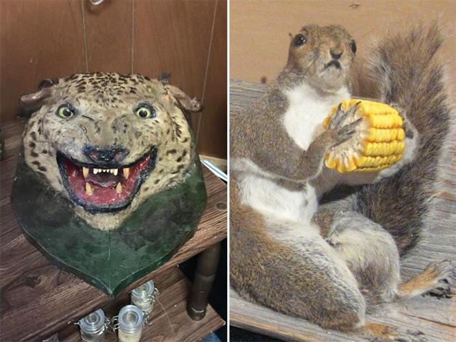 Animal empalhado