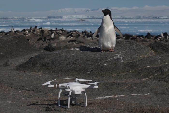 Pinguim ao lado de drone