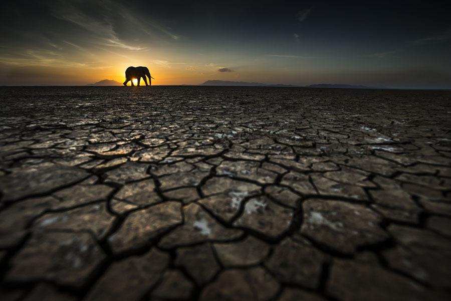 Elefante em busca de água